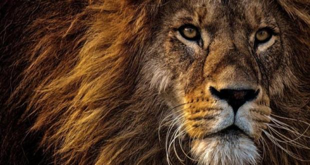 Κένυα: Πανικός από λιοντάρι που απέδρασε από το εθνικό πάρκο του Ναϊρόμπι (βίντεο)